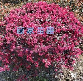 苏州造型景观树、苏州庭院别墅绿化设计、花园绿化工程、庭院绿化苗木,苏州造型树