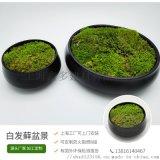永生白发藓盆景自然培育有机办公绿植装饰盆栽