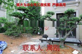 苏州别墅  绿化设计 庭院  苗木基地 精品造型树