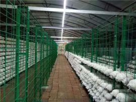 食用菌蘑菇网架,温室出菇网架网格铁丝焊接