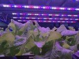 大棚溫室營養燈植物補光燈生長燈廠家直銷育苗燈
