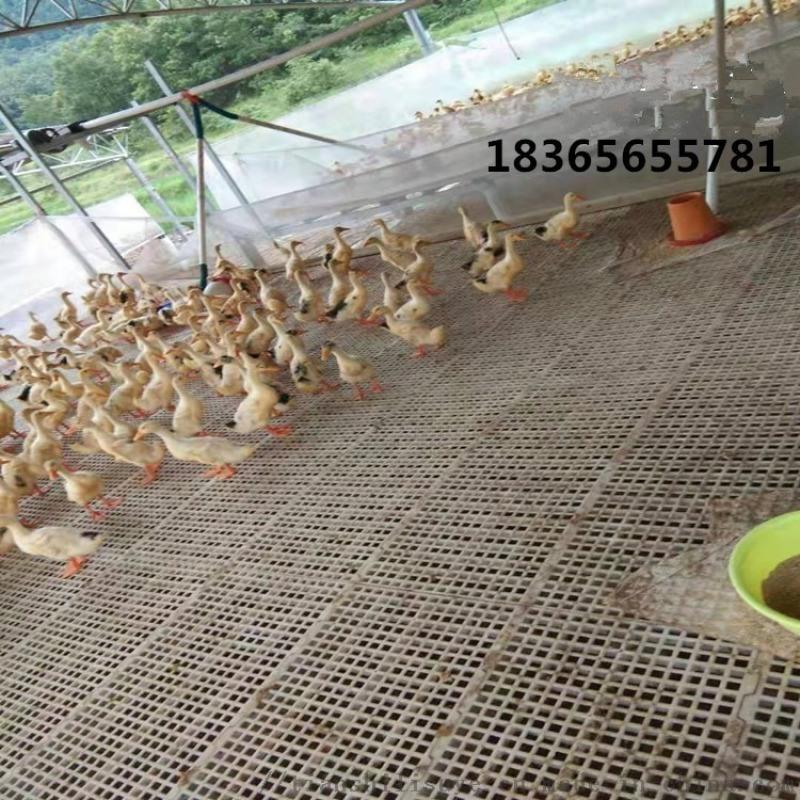 方便安装的鸡用漏粪板 肉鸡漏粪板 鸡用塑料网床