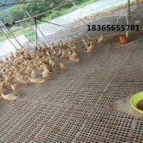 方便安裝的雞用漏糞板 肉雞漏糞板 雞用塑料網牀