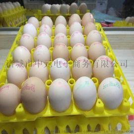 30枚塑料鸡蛋托蛋托生产厂家土鸡蛋蛋托