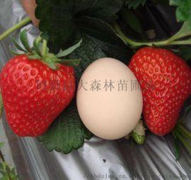 草莓秧价格是多少