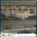 池州海兰灰青年鸡产蛋量,海兰灰青年鸡料肉比