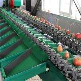 全自动甜瓜选果机生产厂家