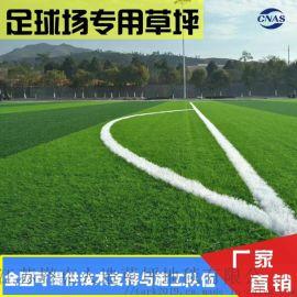 足球场人造草坪江苏塔克人造草坪