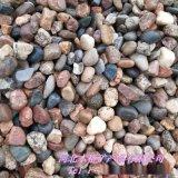 本格现货供应 园林盆栽鹅卵石 雨花石 鱼缸装饰石子