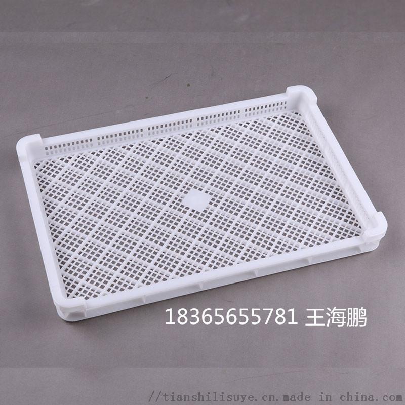 供应江苏漏眼塑料单冻盘 冷库用单冻盘