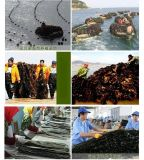 南海海带散装干海带无沙新湾海带宽海带图片厂家批发价格