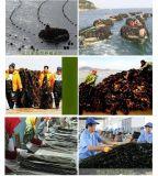 南海海帶散裝幹海帶無沙新灣海帶寬海帶圖片廠家批發價格