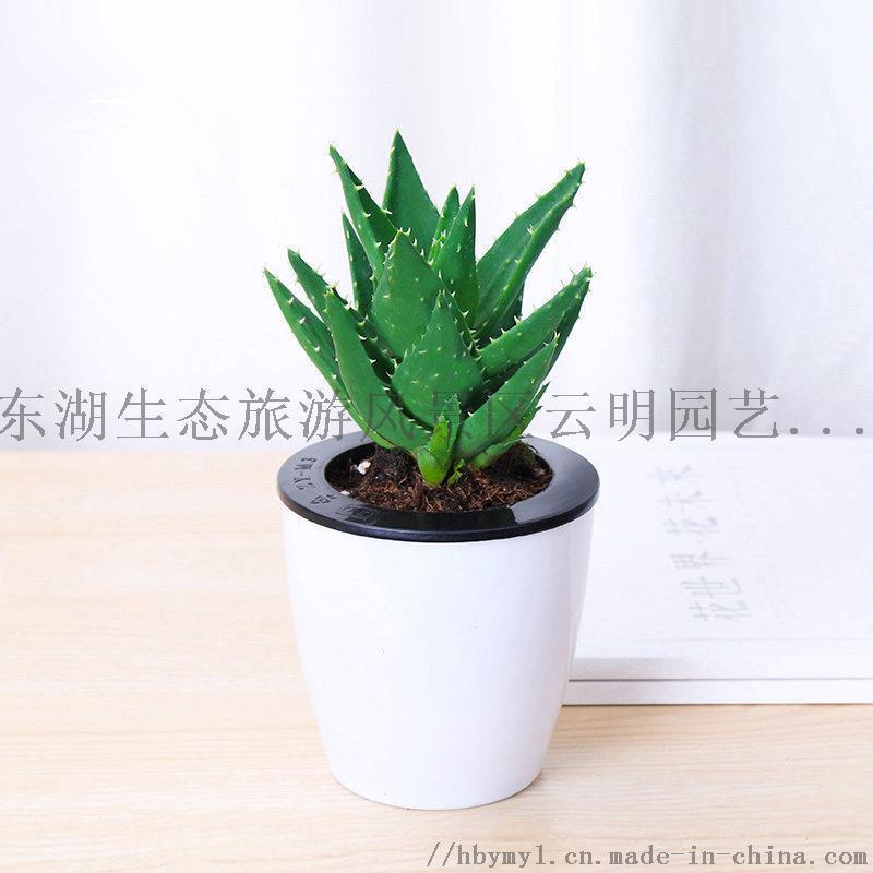武汉绿色花卉植物出租租摆花卉出售配送庭院