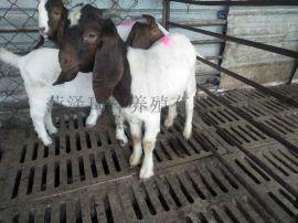 波尔山羊价格 纯种波尔山羊 波尔山羊养殖场