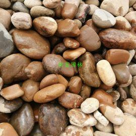 广东河卵石多少钱一吨?广东黄色河卵石哪里有?