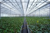 濮陽溫室大棚-濟源溫室大棚