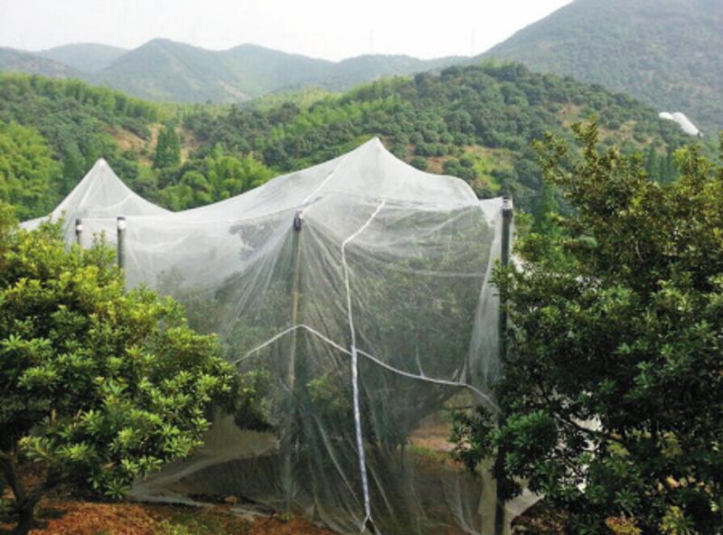 防虫网40目打井专用尼龙网网,30目-80目塑料防虫网
