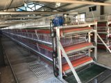 兵海笼具生产三层两门电镀锌肉鸡笼