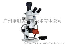 体视荧光显微镜 MZX81