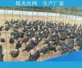 辽宁养鸡荷兰网 PVC养殖荷兰网 绿色方格铁丝网