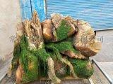 供应江苏浙江杭州苏州常州庭院假山树石设计制作