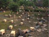 哪余有出售供應中華蜜蜂種苗中蜂羣蜂種土蜂蜜
