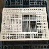 四川成鸡运输笼 塑料成鸡运输笼 大鸡运输笼厂家