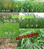 韶关市养羊牧草种子多少钱一斤