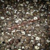 排溼量大高配置的蘑菇烘乾設備,專業的蘑菇烘乾機