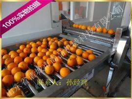 高压喷淋橙子清洗机 推荐橙子清洗机设备