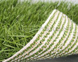 **足球草坪混合系统草坪