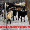 天仕利羊漏糞板防滑純原料羊用塑料漏糞板