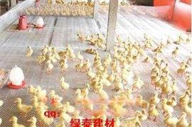 沧州养鸭专用塑料网&肉鸡养殖网15805385945