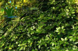 沈阳森海人造植物仿真绿植墙植物墙