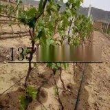 專供廣西4L/8L壓力補償式滴頭 廣西果樹專用滴灌