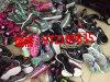 供应北京原单斯凯奇运动健步鞋一手货源