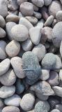 臨汾永順5-8公分鵝卵石廠家,變壓器鵝卵石
