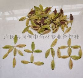 杜仲种子一亩地需要多少种子?杜仲橡胶良种树苗