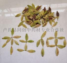 杜仲種子一畝地需要多少種子?杜仲橡膠良種樹苗