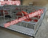 母猪产仔栏双体铸铁梁母猪分娩床宏基畜牧厂家直销