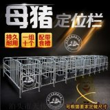 养猪设备厂家长期供应现代化母猪定位栏 保胎限位栏超低价格出售