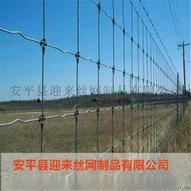 高原牛栏网 镀锌牛栏网 养殖牛栏网