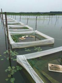 水蛭價格行情,水蛭養殖技術,螞蝗(螞蟥)養殖基地報道  水蛭網箱