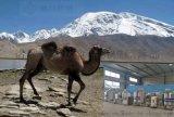 小型駱駝奶生產流水線 駱駝奶生產線廠家哪余有