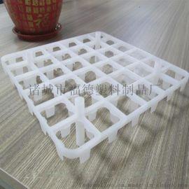 新型禽类蛋托 塑料蛋托用途 塑料鸡蛋托直销