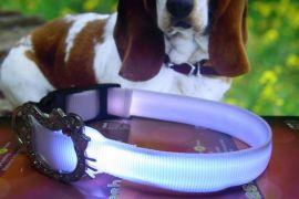 LED发光闪光宠物带
