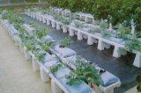 椰糠基质栽培