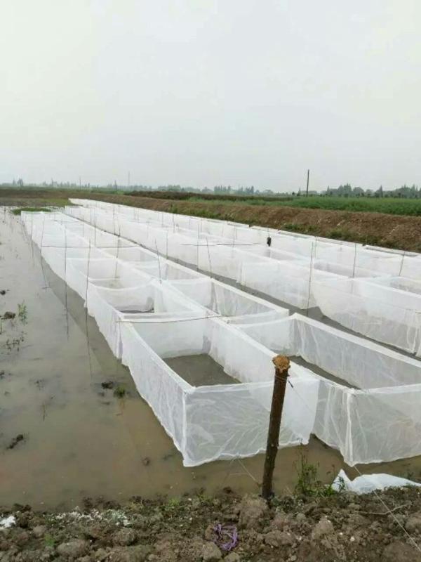 供应抗老化80目水蛭养殖网 防逃网聚乙烯网布围网   小苗孵化