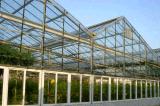 薄膜連棟溫室大棚/陽光板文洛式溫室大棚