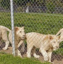 金栏厂家供应镀锌勾花网 动物园护栏网